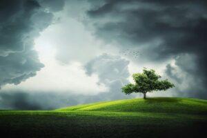 Mental träning - stå stadigt som ett träd